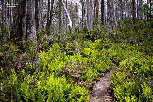 Philip Murray - Green Walk