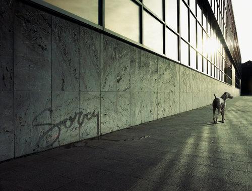 koen-demuynck-sorry