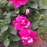 kwiatkizoom1