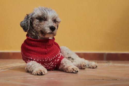 fot. Enrique Mendez, Flickr.com