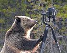 """Jak szybko stracić sprzęt warty """"fortunę"""", czyli Nikon D4 vs niedźwiedź"""