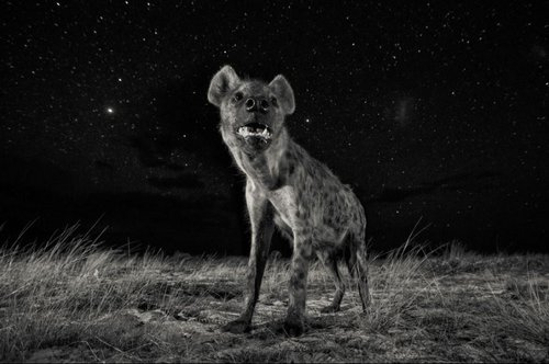 © Will Burrard-Lucas, UK, 1st Place, Professional, Natural World, 2017 Sony World Photography Awards