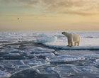 Znany fotograf radzi, jak robić najlepsze zdjęcia dzikiej przyrody