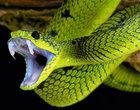 10 najbardziej jadowitych zwierząt jadowite zwierzęta najbardziej jadowite zwierzęta na świecie toksyczni zabójcy