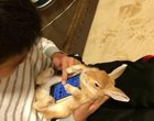 królik jako etui pokręceni Japończycy zwierzęce etui