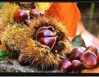 Sharp zapowiada wyświetlacz o rozdzielczości Ultra HD