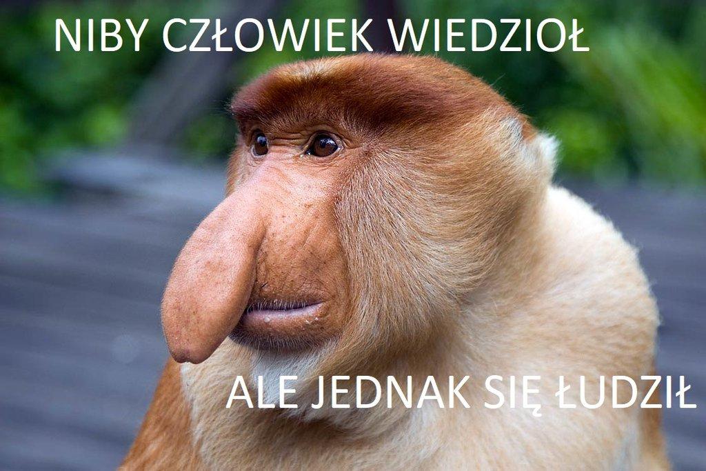 Fot. na podstawie DinoAnimals.pl