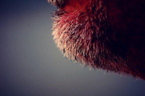 fot. Sean Winters, Flickr.com