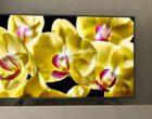 Sony powiększa ofertę telewizorów o trzy nowe serie 4K HDR: XG83, XG80 i XG70