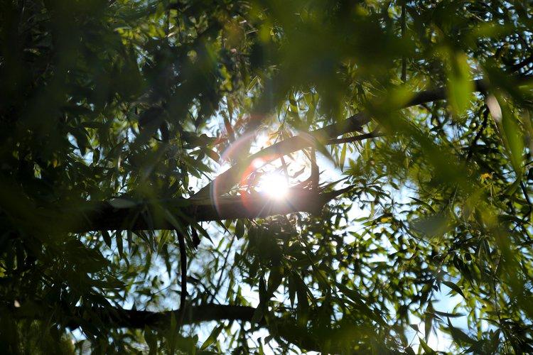 Jak fotografować w słoneczne dni? - nauka fotografowania