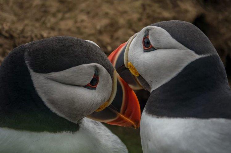 Zagrożone gatunki zwierząt w obiektywie aparatu Sony (galeria) -